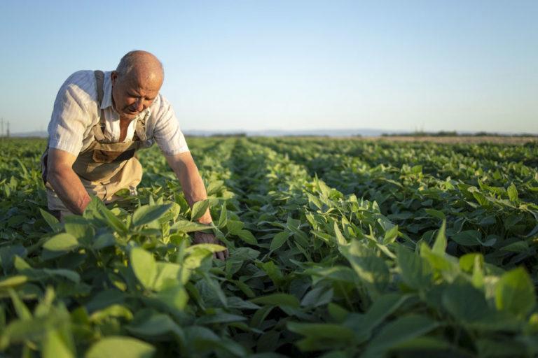 Le Sénat souhaite l'instauration d'une Journée Nationale de l'agriculture